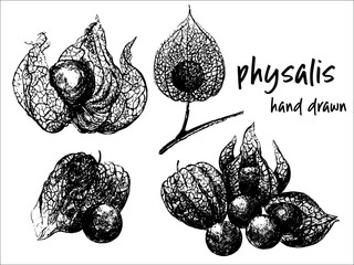 Hand drawn sketch set of physalis fruits with husk. Vector illustration isolated on white background.