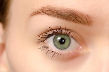 Eye female green macro