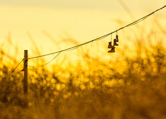 Boots hanging from power lines against golden autumn sky at sunset illustrating a military rite of passage
