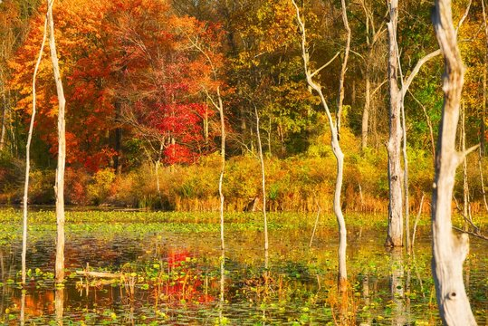Beaver marsh with autumn colors