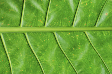 Green leaf pattern background