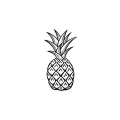 Vector hand drawn Pineapple outline doodle icon. Pineapple sketch illustration for print, web, mobile and infographics isolated on white background.