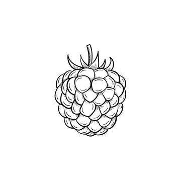 Vector hand drawn Raspberry outline doodle icon. Raspberry sketch illustration for print, web, mobile and infographics isolated on white background.