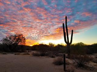 Scottsdale Arizona Sunrise And Saguaro Cactus