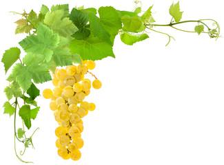 Wall Mural - grappe de raisin blanc et feuilles de vigne