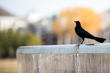 bird will fall colors