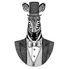 Zebra, Horse. Animal wearing jacket with bow-tie and silk hat, beaver hat, cylinder top hat. Elegant vintage animal. Image for tattoo, t-shirt, emblem, badge, logo, patch