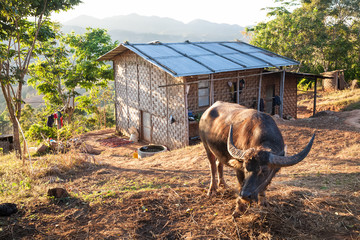 Village and buffalo, Myanmar