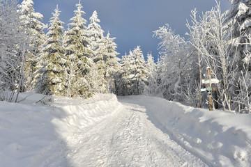 Winterwald Märchenwald tief verschneit