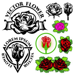 set of vector monochrome and color illustrations with roses