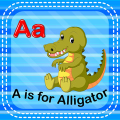 Flashcard letter A is for alligator