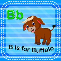 Flashcard letter B is for buffalo
