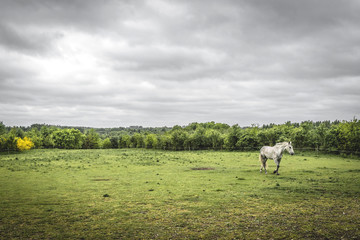 White horse on a rural field with a fence
