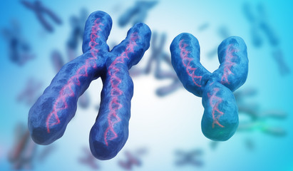 X and Y chromosomes. Genetics concept. 3D rendered illustration.