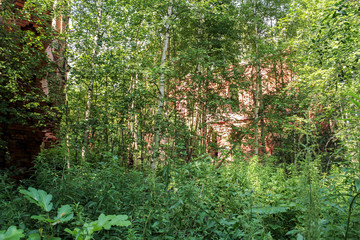 The walls are more often wooded.