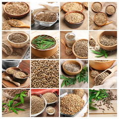 Collage with raw hemp seeds