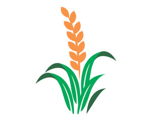 paddy wheat icon agricultural agriculture harvest farming image vector