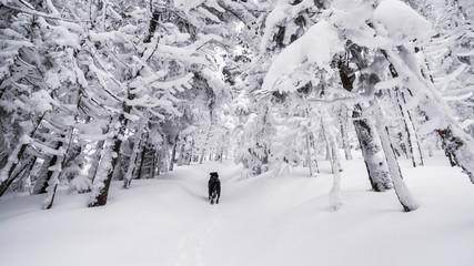 dog in alpine forest