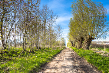 Green spring landscape with path through countryside and road with trees