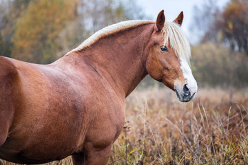 Portrait of a beautiful horse on autumn landscape background.