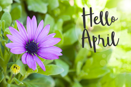 Hello April wallpaper with copy space