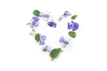 pansy flowers and leaves in a heart shape for valentines or mother's day isolated on a white background, spring love concept, copy space