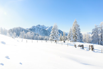 Fototapete - Trees covered with frost and snow in mountains. Austrian Alps