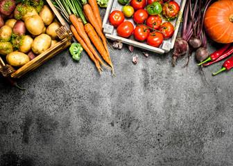 Organic food. Harvested vegetables.
