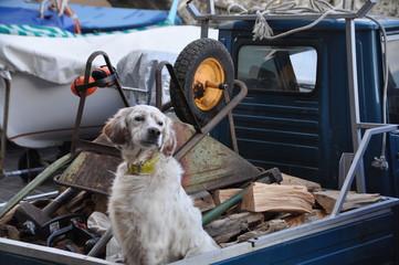a dog sitting on a three wheels vehicle, Bogliasco, Genoa province, Liguria, Italy