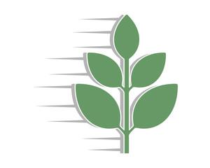 fast plant plant flora image vector icon