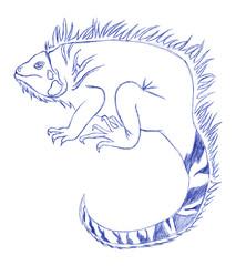Iguana disegno a penna