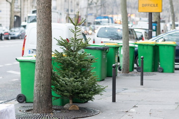 Difficult Christmas trees dumped and discarded on the streets of Paris