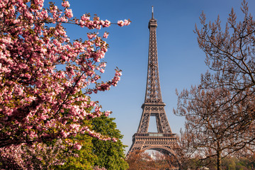 Fototapete - Eiffel Tower with spring trees in Paris, France