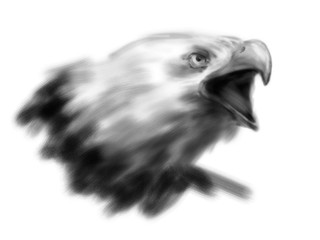 Hand drawing eagle head. Digital illustration