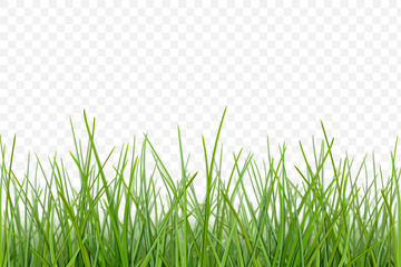 vector Grass pattern for design