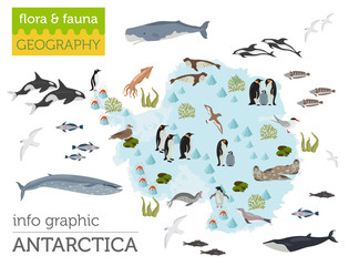 Antarctic, Antarctica,  flora and fauna map, flat elements. Animals, birds and sea life big set. Build your geography infographics collection