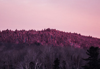 View of sunrise over frosted pines