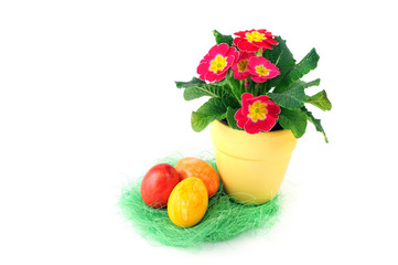 nest of easter eggs with flowerpot and primula flower blooming