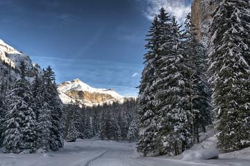 Snowy forest in the mountain, Vallunga - Dolomiti