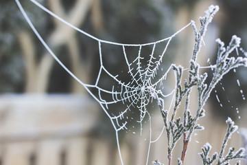 zamarznięta sieć pająka pajęczyna zimą - fototapety na wymiar