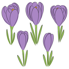 vector blue crocus  flowers set