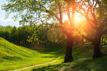 Spring landscape. Green trees and sunset light shining through the branches
