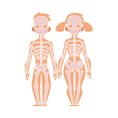 Vector flat structure of the human body, anatomy - female, male bones, human skeleton. Anatomical skeletal system, education, science design object. Isolated illustration, white background.