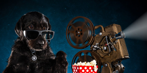 Black funny dog with old style movie projector.
