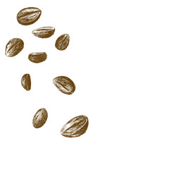 Coffee beans sketch isolated on white background vector illustration