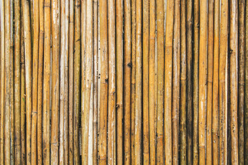 Old yellow bamboo fence texture, bamboo background, texture background, bamboo forest