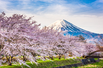 Mt. fuji Japan in Spring