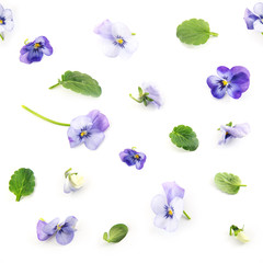 seamless pattern of purple blue pansy spring flowers and leaves on a white background, floral design photo collage