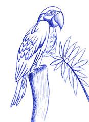 pappagallo disegno a penna