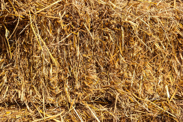 Dry straw to feed livestock during food shortages.
